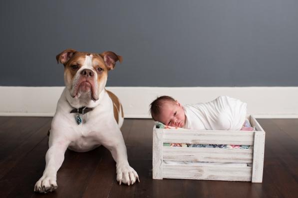 newborn baby and an american bulldog