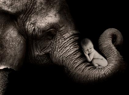 baby on elephant trunk